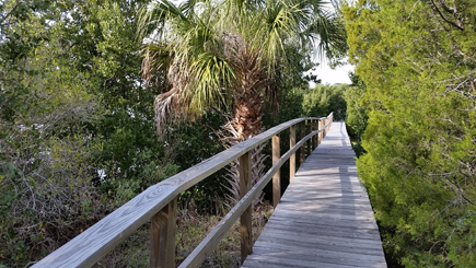 boardwalk on the nature trail